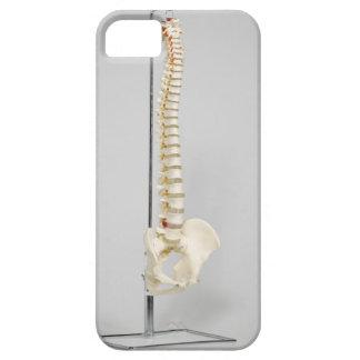 Chiropractic skeleton iPhone 5 cases
