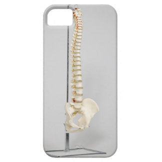 Chiropractic skeleton iPhone 5 cover