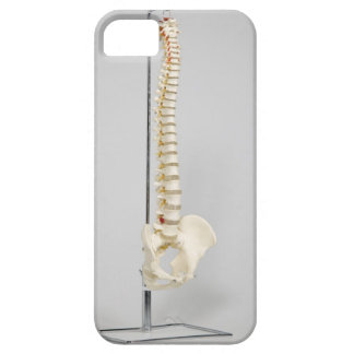 Chiropractic skeleton iPhone 5 covers
