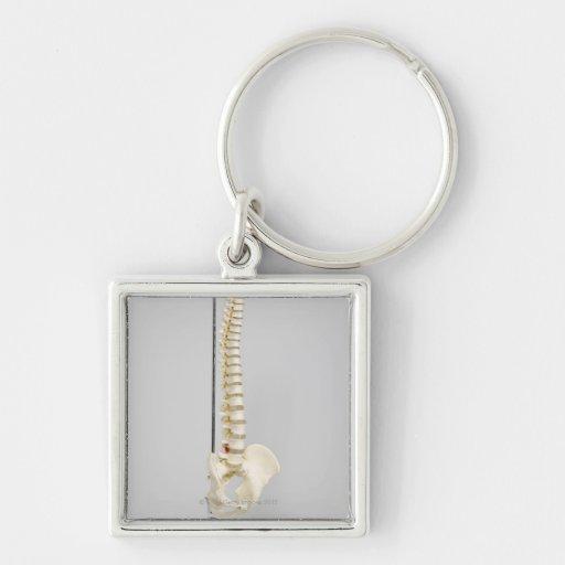 Chiropractic skeleton key chains