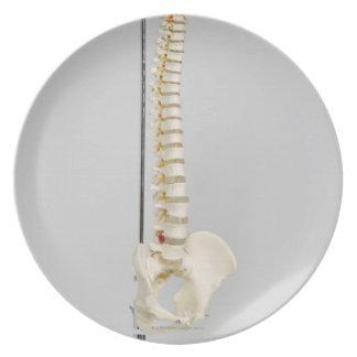 Chiropractic skeleton plate