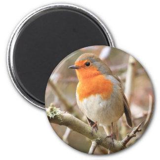 Chirpy Robin 6 Cm Round Magnet