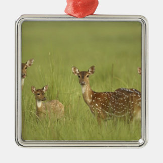 Chital Deers and a young one,Corbett National Christmas Ornament