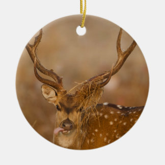 Chital or Cheetal, Spotted Deer, male grazing Christmas Ornament