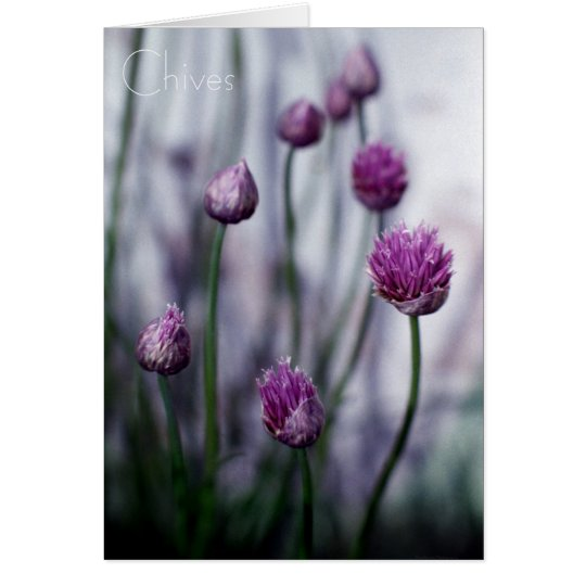 Chives Growing Wild Card