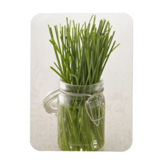 Chives Magnet