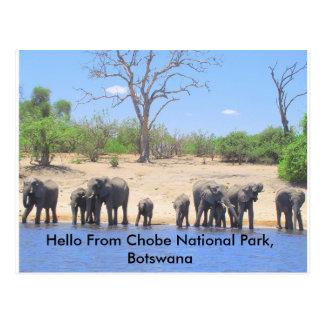 Chobe Elephant Post Cards