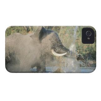 Chobe River, Botswana, Africa Case-Mate iPhone 4 Cases