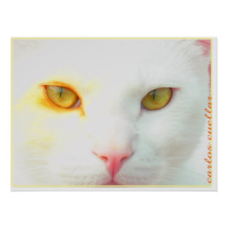 choco the cat poster