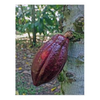 chocolade fruit postcard