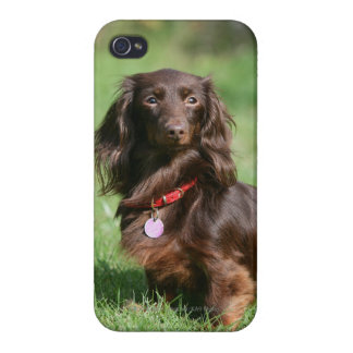 Chocolate and Tan Long-haired Miniature Dachshund iPhone 4 Cover