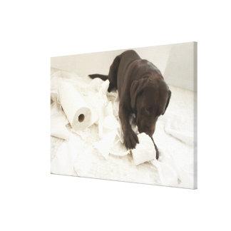Chocolate brown labrador. canvas print