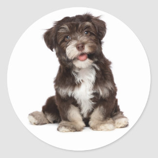 Chocolate Brown & White Havanese Puppy Dog Sticker