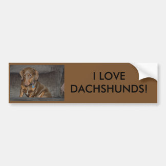 Chocolate Dachshund Bumper Sticker