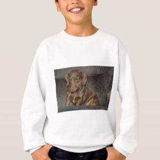 Chocolate Dachshund Sweatshirt