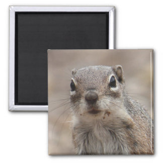 Chocolate Donut Face Squirrel Magnet