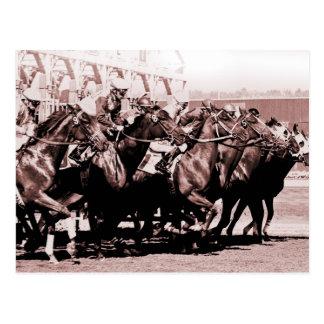 Chocolate Horse Race Postcards