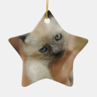 Chocolate Kitten with Blue Eyes Ceramic Star Decoration