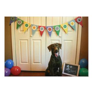 "Chocolate Lab 1st Birthday Party Invitation 5"" X 7"" Invitation Card"