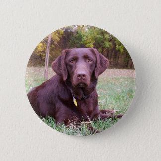 Chocolate Lab 6 Cm Round Badge