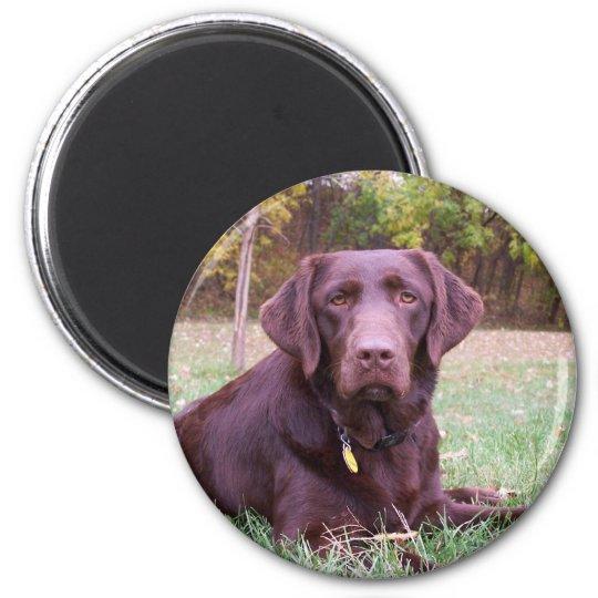 Chocolate Lab 6 Cm Round Magnet
