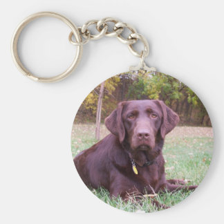 Chocolate Lab Basic Round Button Key Ring