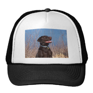 Chocolate Lab Cap