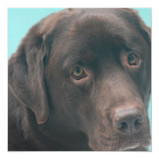 "Chocolate Lab Dog Invitations 5.25"" Square Invitation Card"