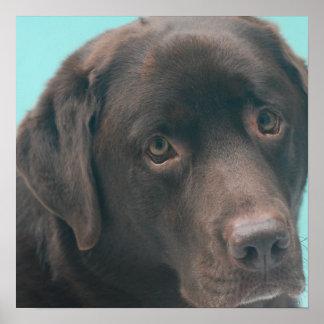 Chocolate Lab Dog Poster