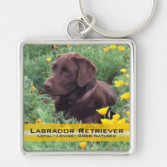 Chocolate Lab in California Poppy Patch Silver-Colored Square Key Ring