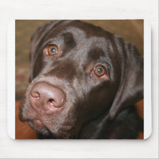 Chocolate Lab Mouse Mat