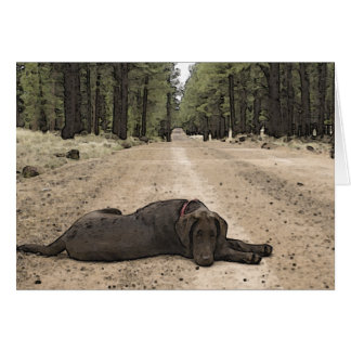 Chocolate Lab On A Forest Trail Greeting Card