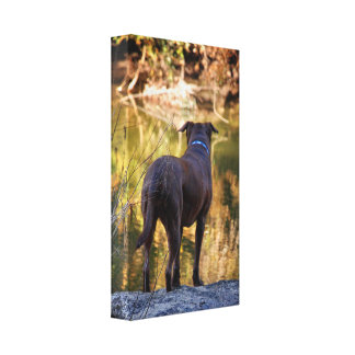 Chocolate Lab Pit Mix Dog Serene Stretched Canvas Print