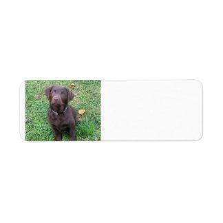 chocolate lab pup.png return address label