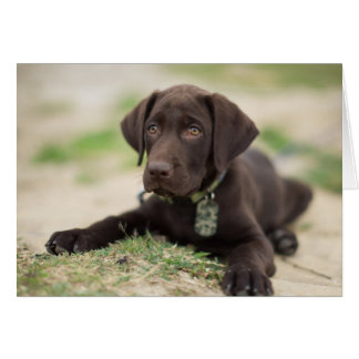 Chocolate Lab Puppy Card