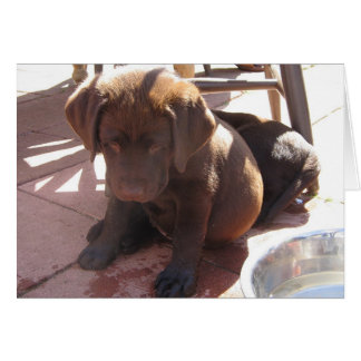 Chocolate Lab Puppy Greeting Card