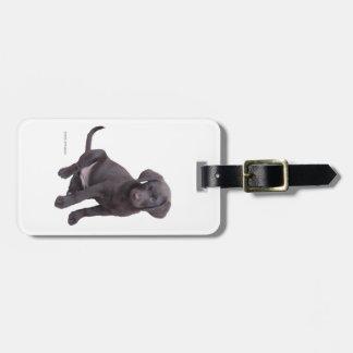 chocolate lab puppy luggage tag