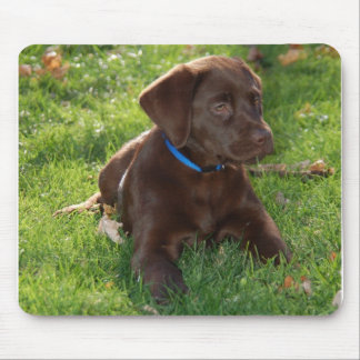 Chocolate Lab Puppy Mouse Mat