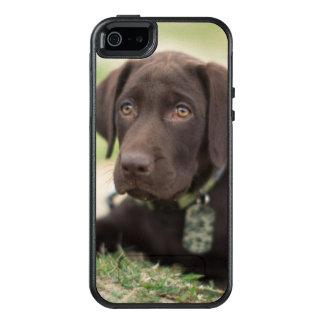 Chocolate Lab Puppy OtterBox iPhone 5/5s/SE Case