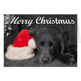 Chocolate Lab Sleeping Near Santa Hat Photograph Card