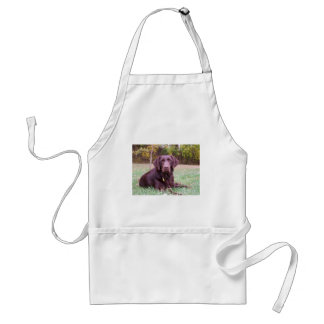 Chocolate Lab Standard Apron