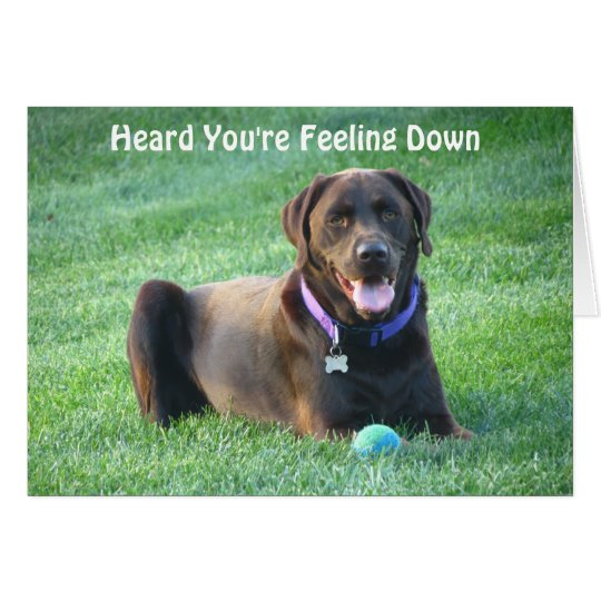 Chocolate Lab Thinking Of You Card! Card