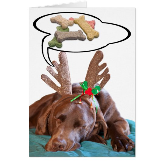 Chocolate Lab With Antlers And Treat Dreams Photog