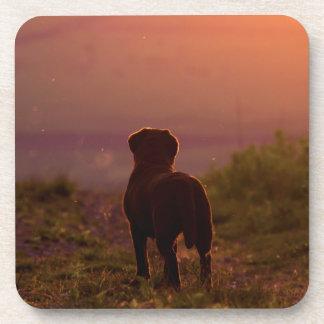 Chocolate Labrador at Sunset Coasters