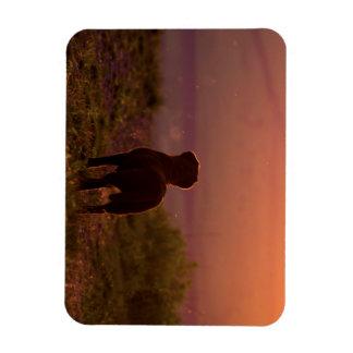 Chocolate Labrador at Sunset Magnet