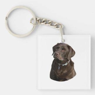 Chocolate Labrador dog photo portrait Double-Sided Square Acrylic Key Ring