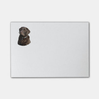 Chocolate Labrador dog photo portrait Post-it® Notes