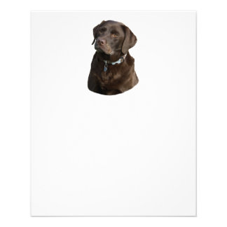 Chocolate Labrador photo portrait 11.5 Cm X 14 Cm Flyer
