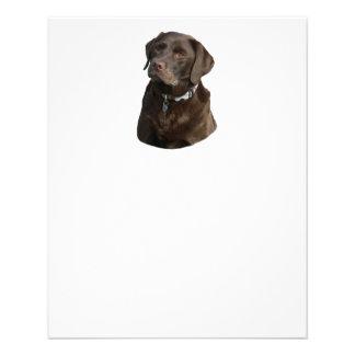 Chocolate Labrador photo portrait 11.5 Cm X 14 Cm Flyer