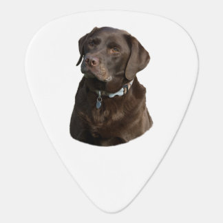 Chocolate Labrador photo portrait Guitar Pick